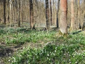 21. březen – Mezinárodní den LESů. Tématy pro rok 2015 jsou les, klima a změny klimatu